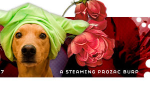 dooce.com Masthead for April 2007 by Heather B. Armstrong titled A Steaming Prozac Burp
