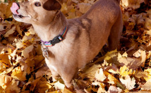 Photo of Chuck the dog by Heather B. Armstrong for dooce.com