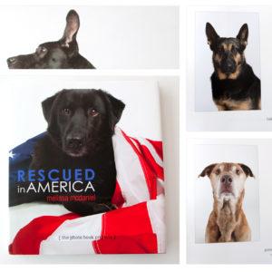 book of pet adoption for dooce.com