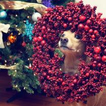 Christmas Chuck