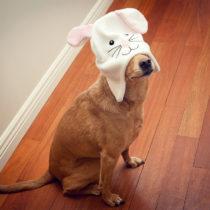 Chuck Rabbit