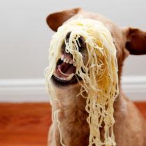spaghetti chuck