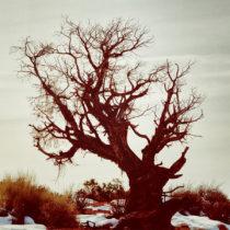 Carnivale tree