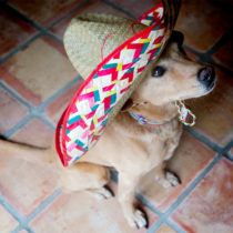 tequila for dogs