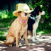 cowboy chuck