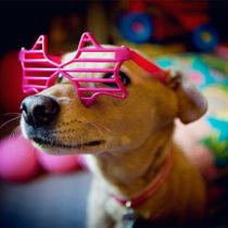 Elton dog