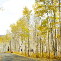 out among the Aspens