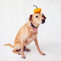 festive pumpkin chuck