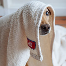 twill blanket