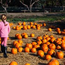 pumpkins 2015